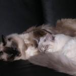 Loona & Leo
