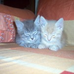Chester & Josephine