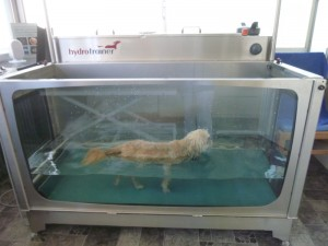 Peppi trainiert im Unterwasserlaufband