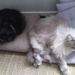 Lilly und Sonni