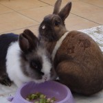 Samy und Lilly